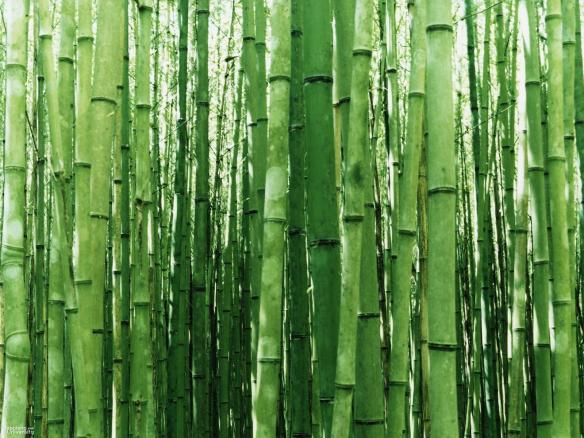 zen-bamboo-wallpaper-japan-1600-1200
